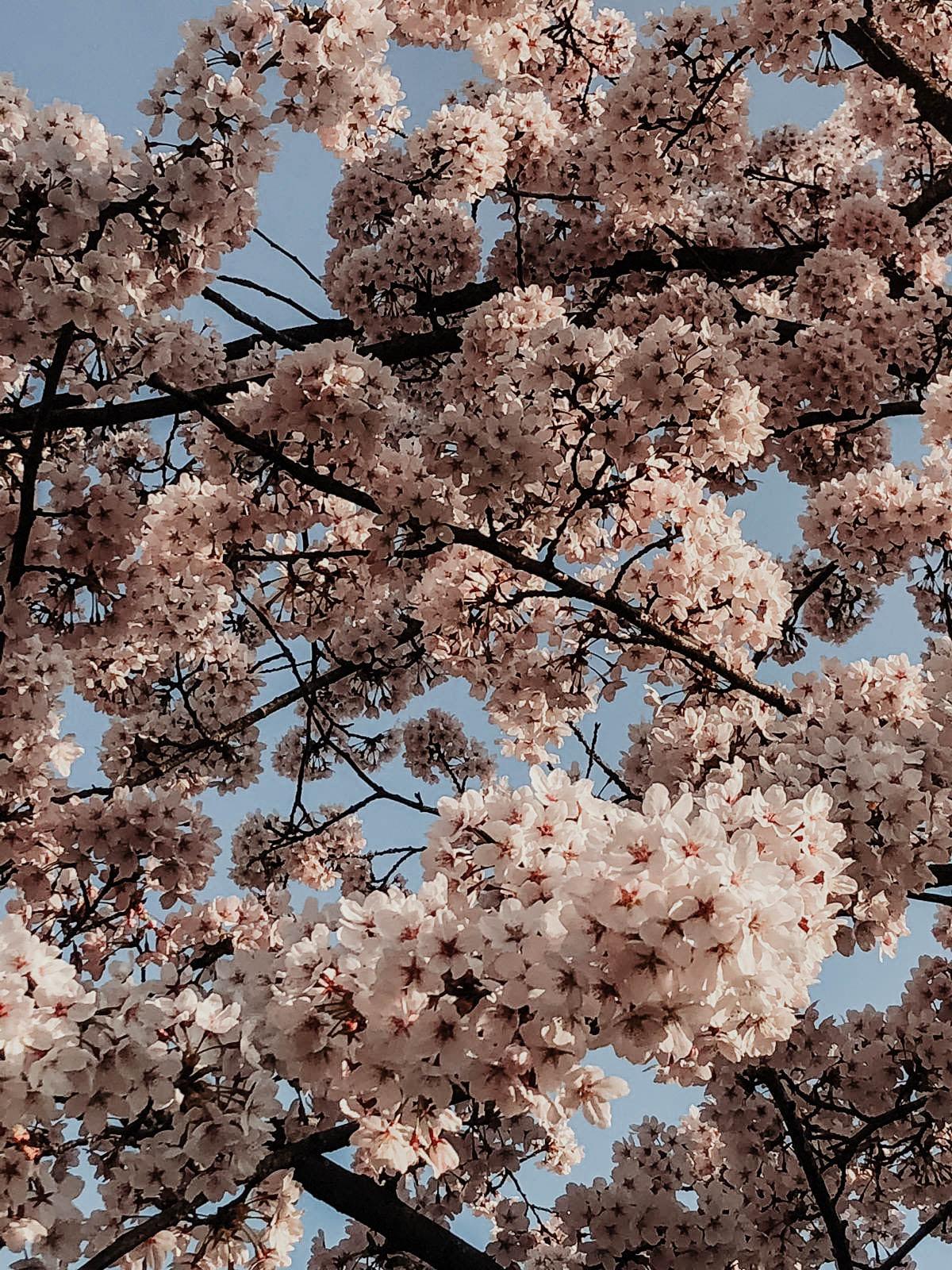 Spring Overload